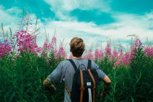 Student wandering through a field of flowers
